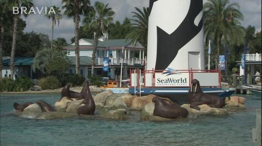 дельфины в hd-видео