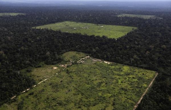 За вырубкой леса можно наблюдать из космоса