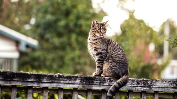 животные кот